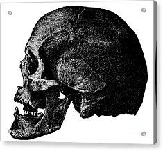 Anatomical Drawing Of A Human Skull Acrylic Print