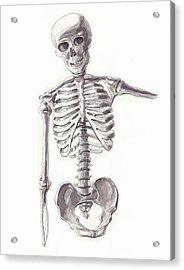 Anatomical Study Of Skeleton Acrylic Print