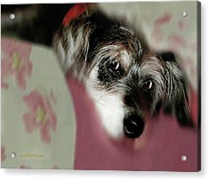 And This Is Sparky6 Acrylic Print