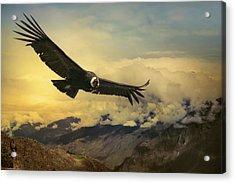 Andean Condor Acrylic Print by Istvan Kadar Photography
