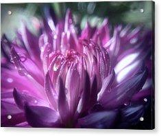 Anemone 3 Acrylic Print