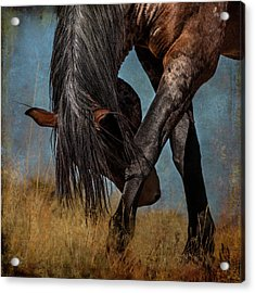 Angles Of The Horse Acrylic Print