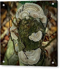 Another Fungus Acrylic Print