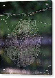 Another Web Acrylic Print