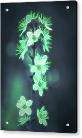 Acrylic Print featuring the photograph Another World - Glowing Flowers by Scott Lyons