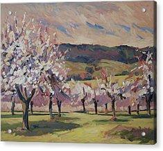 Apple Blossom Geuldal Acrylic Print