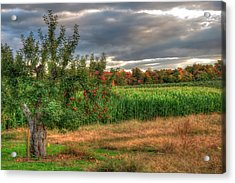 Acrylic Print featuring the photograph Apple Trees In Autumn - New Hampshire by Joann Vitali