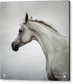 Acrylic Print featuring the photograph Arabian Horse Portrait by Dimitar Hristov