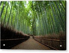Arashiyama Sagano Acrylic Print