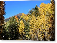Arizona Aspens With Mountains Acrylic Print