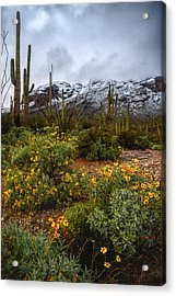 Arizona Flowers And Snow Acrylic Print