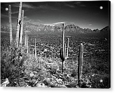 Arizona, Tucson, Saguaro Np, Brown Acrylic Print