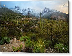 Arizona Winter Light Acrylic Print