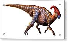 Artwork Of A Parasaurolophus Dinosaur Acrylic Print by Mark Garlick