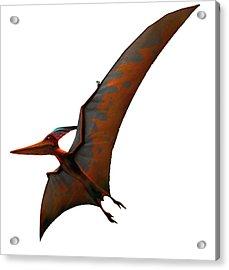 Artwork Of Pteranodon Sternbergi Acrylic Print by Mark Garlick