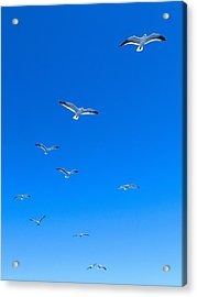 Ascending To Heaven Acrylic Print