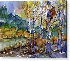 Aspen Bears At Emmigrant Gap Acrylic Print