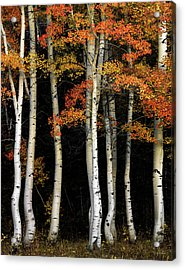Acrylic Print featuring the photograph Aspen Contrast by Leland D Howard