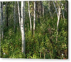 Acrylic Print featuring the photograph Aspen Solitude by Lon Dittrick