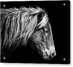 Acrylic Print featuring the photograph Assateague Pony Sarah's Sweet Tea B And W by Bill Swartwout Fine Art Photography