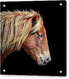 Acrylic Print featuring the photograph Assateague Pony Sarah's Sweet Tea On Black Square by Bill Swartwout Fine Art Photography