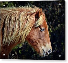 Acrylic Print featuring the photograph Assateague Pony Sarah's Sweet Tea Profile by Bill Swartwout Fine Art Photography