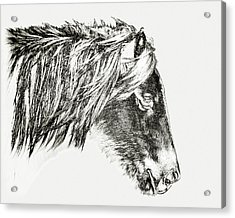 Acrylic Print featuring the photograph Assateague Pony Sarah's Sweet Tea Sketch by Bill Swartwout Fine Art Photography