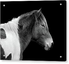 Acrylic Print featuring the photograph Assateague Pony Susi Sole Black And White Portrait by Bill Swartwout Fine Art Photography