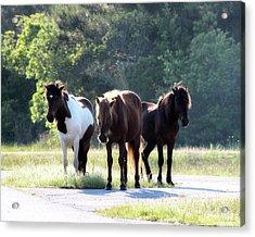 Assateague Wild Ponies Acrylic Print