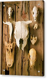 Assorted Animal Skulls On Wooden Fence Acrylic Print by Garry Gay