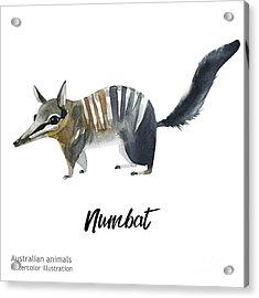 Australian Animals Watercolor Acrylic Print