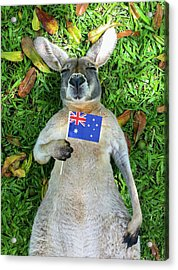 Australian Kangaroo Acrylic Print by Mb Photography