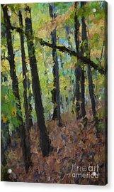 Autumn Afternoon Acrylic Print by David Boudreau