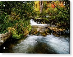 Acrylic Print featuring the photograph Autumn Along The Provo Deer Creek by TL Mair
