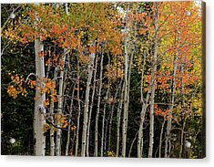 Acrylic Print featuring the photograph Autumn As The Seasons Change by James BO Insogna