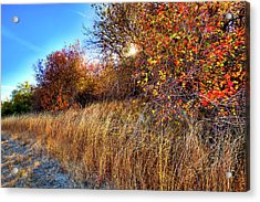 Acrylic Print featuring the photograph Autumn At Magpie Forest by David Patterson