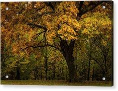 Acrylic Print featuring the photograph Autumn Beauty by Scott Bean