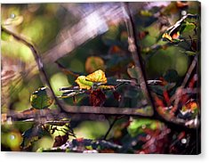 Acrylic Print featuring the photograph Autumn Beginnings by Whitney Goodey
