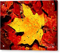 Autumn Beige Yellow Leaf On Red Leaves Acrylic Print