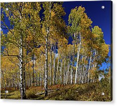 Acrylic Print featuring the photograph Autumn Blue Skies by James BO Insogna