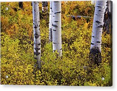 Autumn Contrasts Acrylic Print