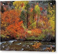 Autumn Creek Acrylic Print by Leland D Howard