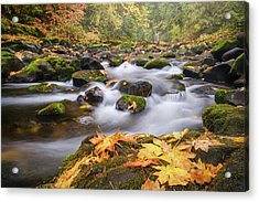 Acrylic Print featuring the photograph Autumn Creek by Nicole Young