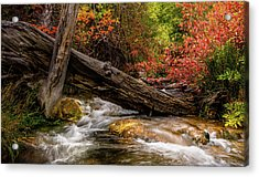 Acrylic Print featuring the photograph Autumn Dogwoods by TL Mair