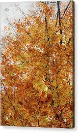 Autumn Explosion 1 Acrylic Print