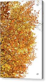 Autumn Explosion 2 Acrylic Print