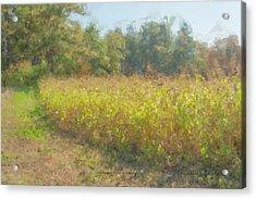 Autumn Field In Sunlight Acrylic Print