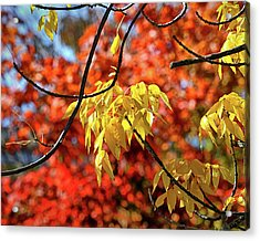 Acrylic Print featuring the photograph Autumn Foliage In Bar Harbor, Maine by Bill Swartwout Fine Art Photography