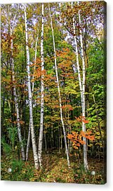 Autumn Grove, Vertical Acrylic Print