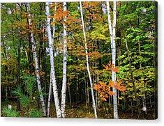 Autumn Grove, Wisconsin Acrylic Print